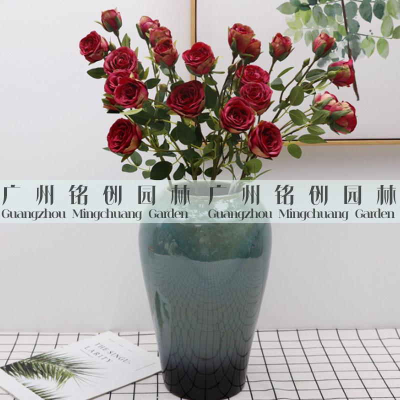 6头金香玉玫瑰