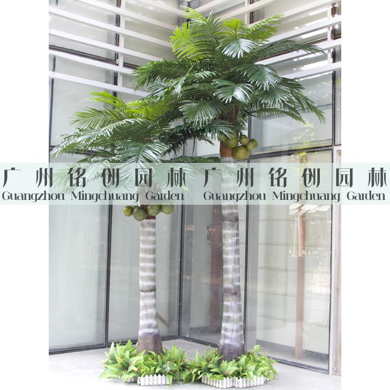 室内扇葵树