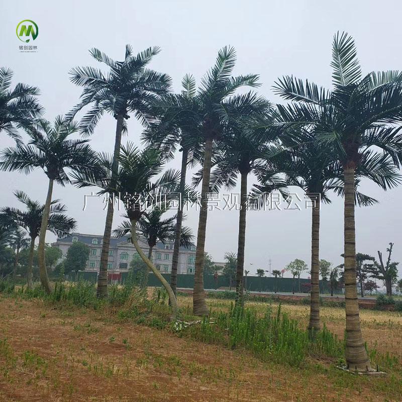 漯河婚庆小镇仿真椰子树