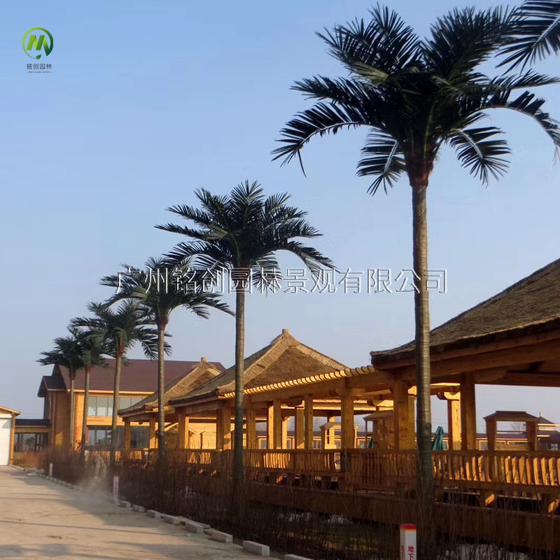 青岛金沙滩仿真椰子树